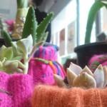 verticalizza_sto_cactus