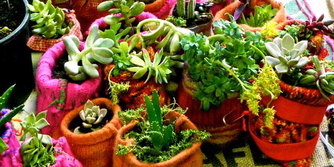 verticalizza sto cactus