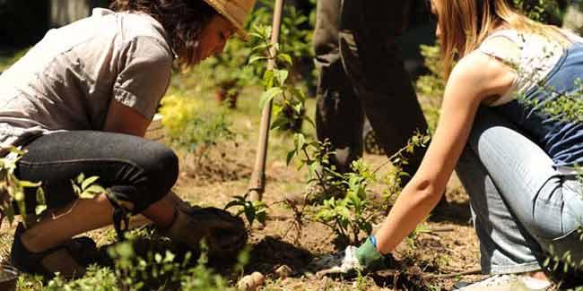 creare_un_giardino_comunitario